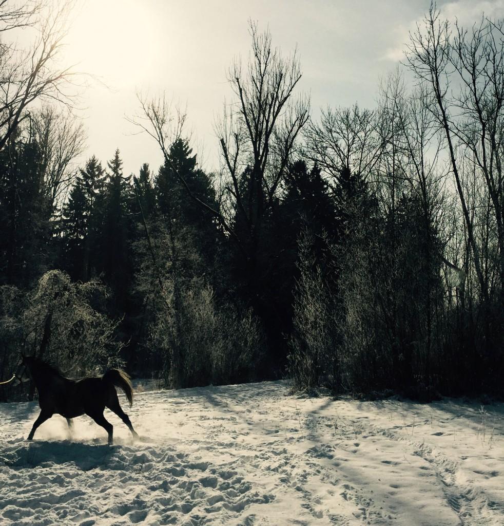 pferd_im_schnee_blog