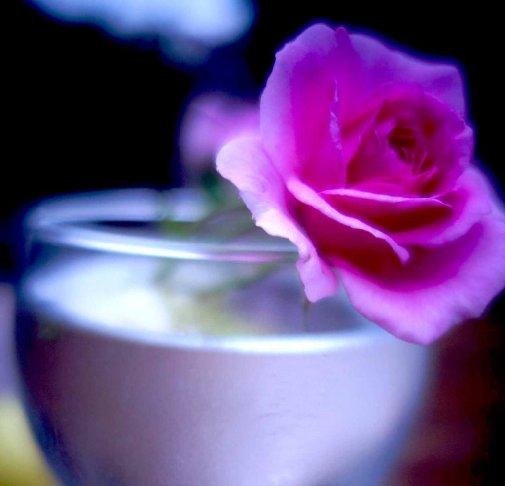 rose_glas_abend_blog